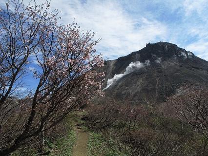 2009.5.19那須峰桜 137