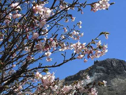 2009.5.19那須峰桜 179