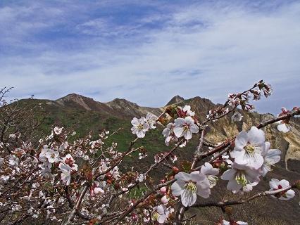 2009.5.19那須峰桜 371