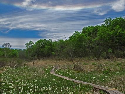 2009.5.22駒止湿原ミズバショウ 038