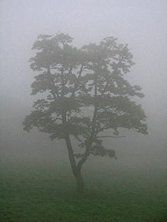 2009.5.30雨の一日日光へ 061