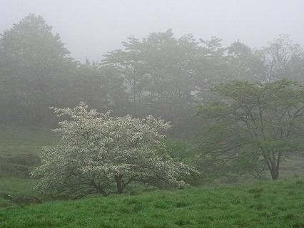 2009.5.30雨の一日日光へ 056