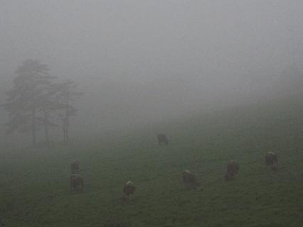 2009.5.30雨の一日日光へ 068