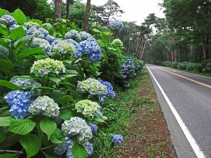 2009.那須街道アジサイ 044