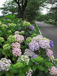 2009.6.21雨の喜連川アジサイ 112