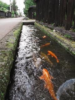 2009.6.20喜連川アジサイ088