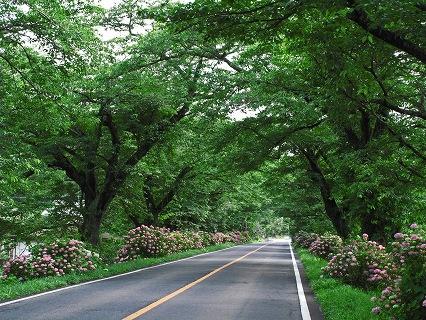 2009.6.21雨の喜連川アジサイ 105-a