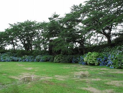 2009.6.雨の黒羽城址公園アジサイ 082