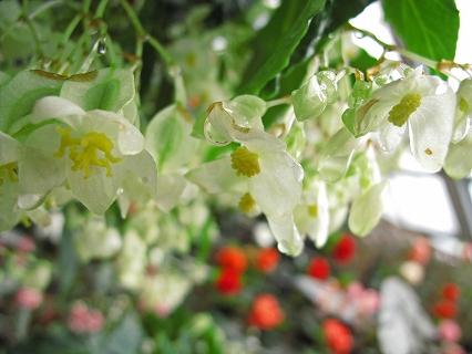 2009.7.4那須お花の城・大内宿 027