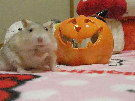きららもかぼちゃと