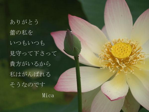 P7088038.jpg