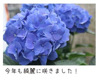20090712_03.jpg