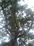 事任の楠木