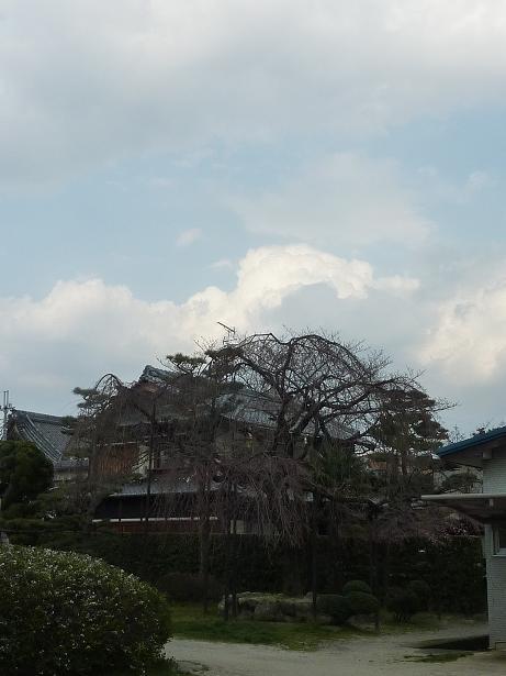 P1120984b.jpg