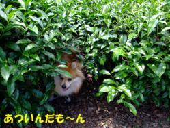 DSCF5942.jpg