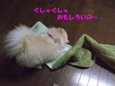 DSCF6147_20090611155106.jpg