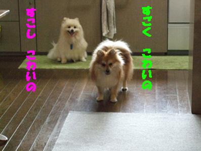 DSCF6216_20090619191038.jpg