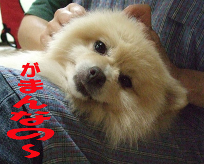 DSCF6313_20090625094913.jpg
