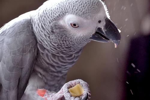 Chloe食べる