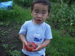 a_tsui_tomato.jpg