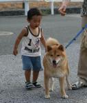aa_kamiura_dog.jpg