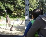red_zoo_giraffe.jpg
