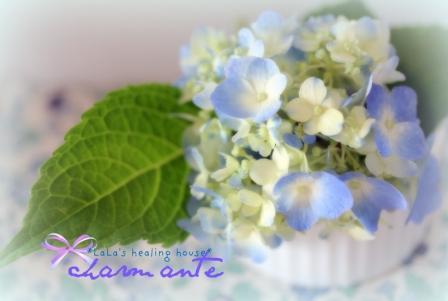 デザート紫陽花♪