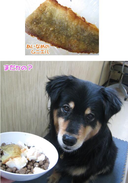 gochi2.jpg
