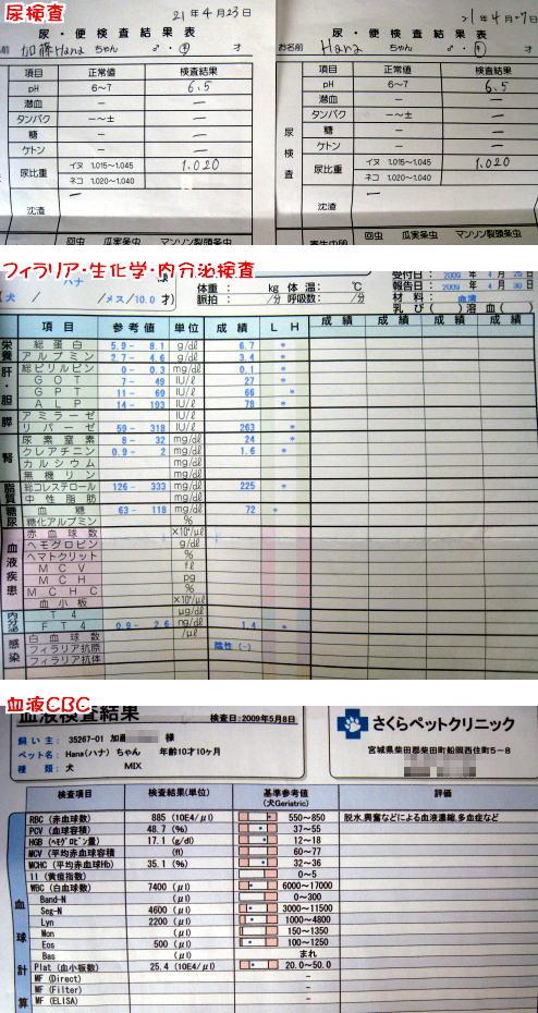 onesho_a.jpg