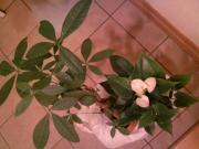 散財祭り♪観葉植物
