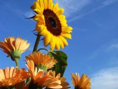 今日の花0807