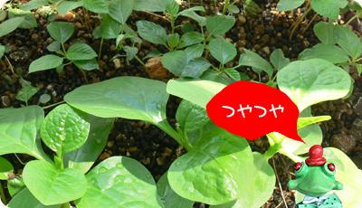 green1006_01.jpg