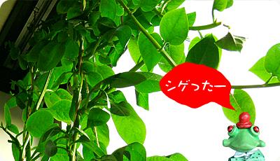 green1006_02.jpg