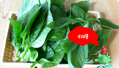 green1006_03.jpg