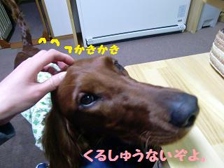 CIMG3078.jpg