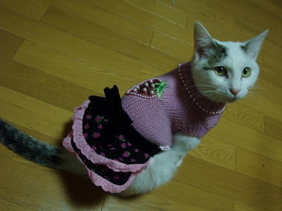 猫20090123 021-01