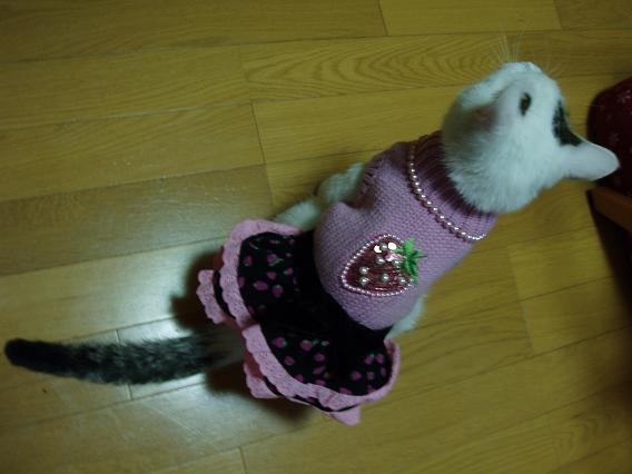 猫20090123 022-01