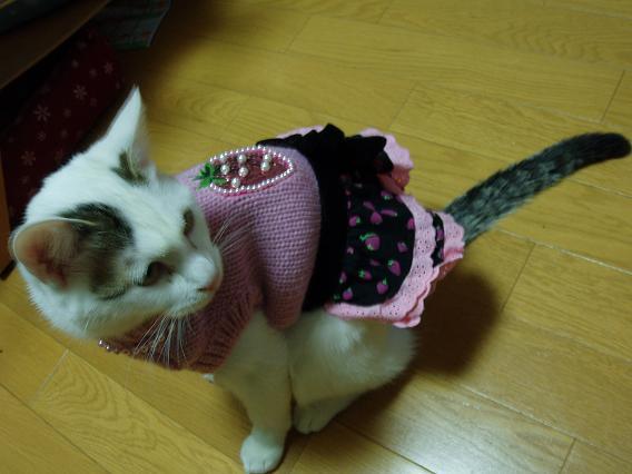 猫20090123 026-01