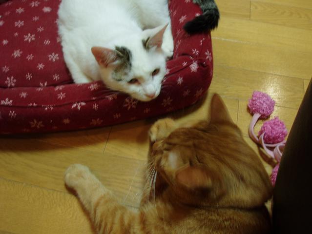 猫20090123 018-01