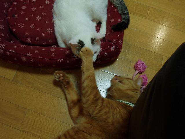 猫20090123 017-01