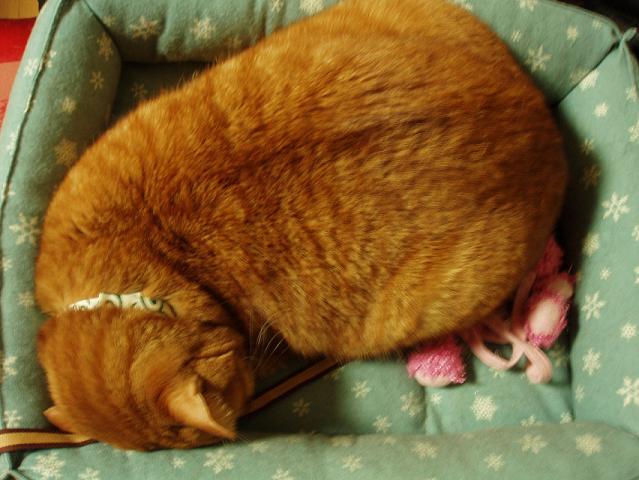 猫20090123 001-01