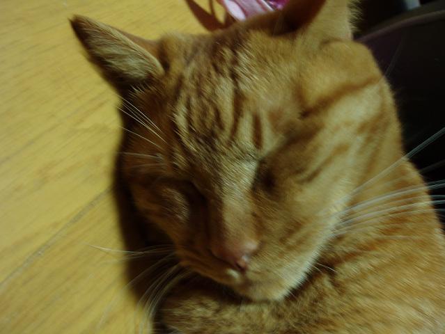 猫20090123 012-01