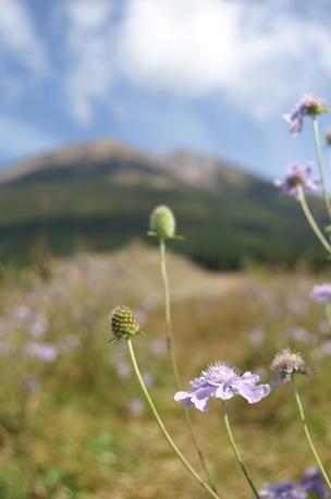 7D+16-80ZEISS お花♪大山をバックに。。。