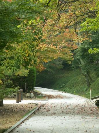 DiMAGE A1 秋色の小道