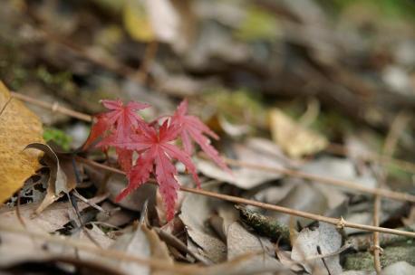 α-SweetD+16-80ZEISS 小さい秋?♪小さい秋?♪♪