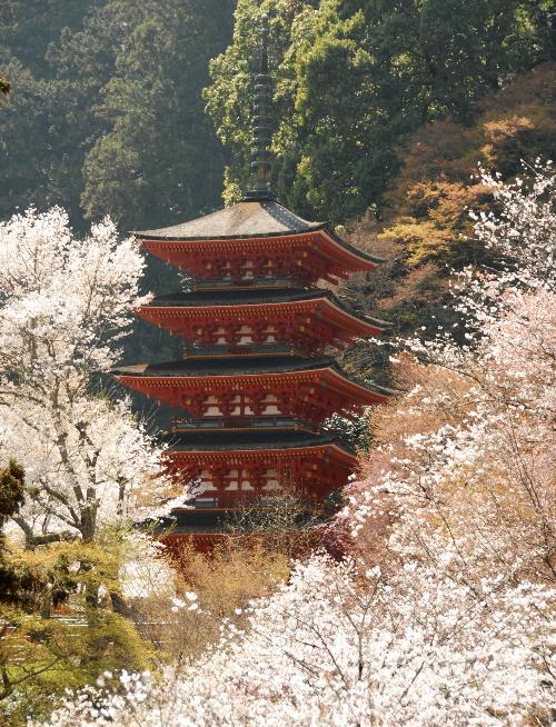 桜花#01