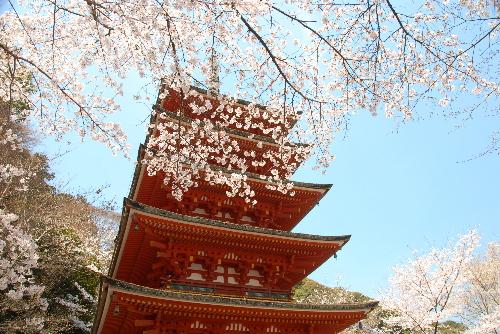 桜花#04