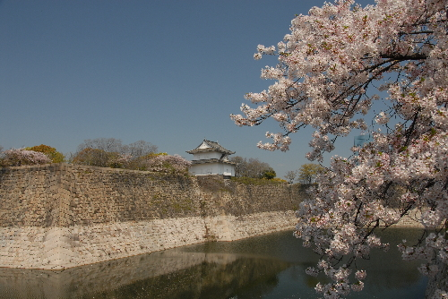 osaka桜002