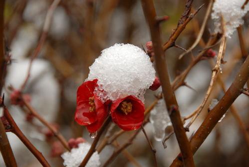 osaka雪景色02