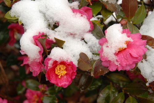 osaka雪景色05